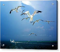 Seagulls  Acrylic Print by Brittany H