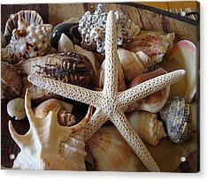 She Sells Seashells Acrylic Print by Tamara Bettencourt