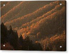 Smokies Hillside At Autumn Acrylic Print by Andrew Soundarajan
