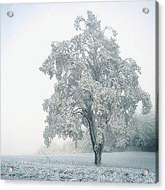 Snowy Winter Landscape Acrylic Print by John Foxx