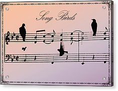 Songbirds With Border Acrylic Print by Bill Cannon