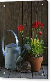 Acrylic Print featuring the photograph Summer Geraniums by Dodie Ulery