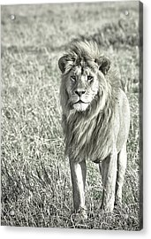 The King Stands Tall Acrylic Print by Darcy Michaelchuk
