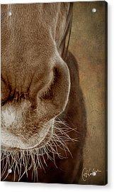 The Soft Spot II Acrylic Print by Christine Hauber