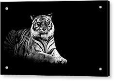 Tiger Acrylic Print by Malcolm MacGregor