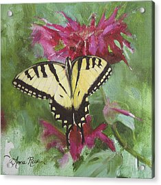Tiger Swallowtail Acrylic Print by Anna Rose Bain