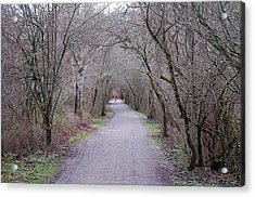 Trail Tunnel Acrylic Print by J D Banks