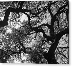 Tree Gazing Acrylic Print by Lindsey Orlando
