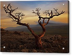 Tree On Top Of Hill Of  Yorkshire Dales Acrylic Print by Ray Bradshaw