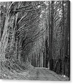 Trees Along Sandymount Track, New Zealand Acrylic Print by Atan Chua