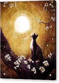 Tuxedo Cat In Golden Cherry Blossoms Acrylic Print by Laura Iverson