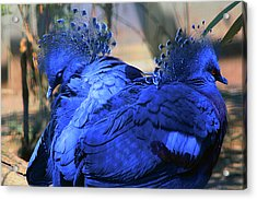 Two Blue Acrylic Print by Terry Cork