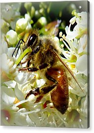 Up Close And Personal Honey Bee Acrylic Print