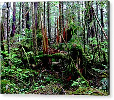 Very Old Forest Acrylic Print by Anne Havard