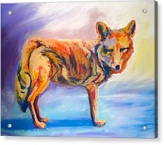 Acrylic Print featuring the pastel Watching Coyote by Pat Crowther
