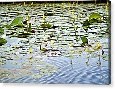 Water Lilies Acrylic Print by Sarita Rampersad