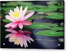 Water Lily In Lake Acrylic Print