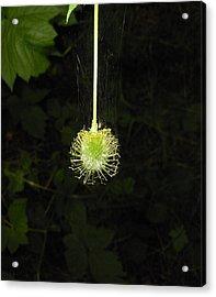 Web Weaver Acrylic Print by Ken Day