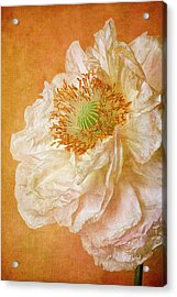 White Double Poppy Acrylic Print by © Leslie Nicole Photographic Art