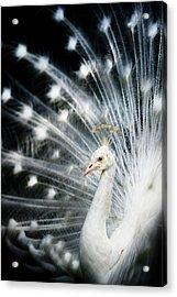 White Peacock Acrylic Print by Copyright (c) Richard Susanto