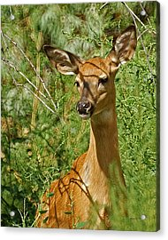 Whitetail Doe Painterly Acrylic Print by Ernie Echols