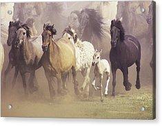 Wild Horses Running Acrylic Print by John Foxx