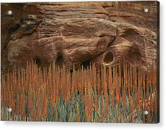 Wildflowers In The Desert Land Of Petra Acrylic Print by Annie Griffiths
