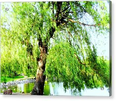 Willow Over Pond Acrylic Print