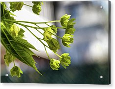 With The Breeze - Acrylic Print