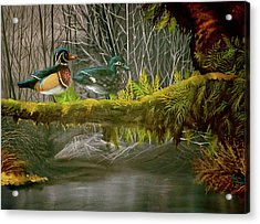 Wood Duck Love Acrylic Print