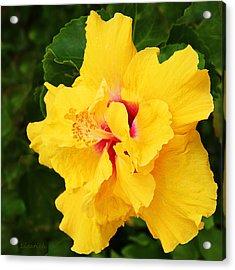 Yellow Double Hibiscus Acrylic Print