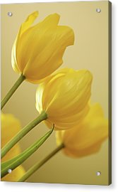 Yellow Tulip Trio Acrylic Print by Bonnie Bruno