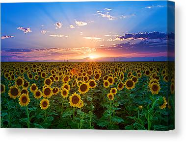 Large Group Of Objects Canvas Prints