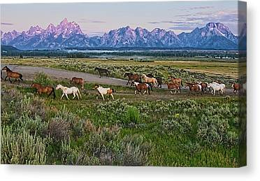Large Group Of Animals Canvas Prints