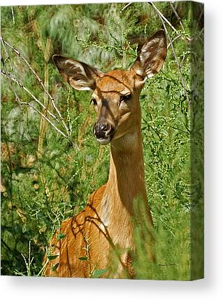 Fountain Creek Nature Center Canvas Prints