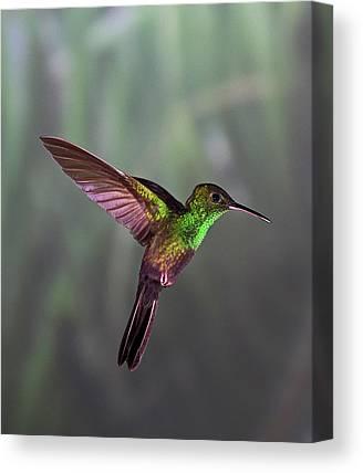 Bird People Canvas Prints