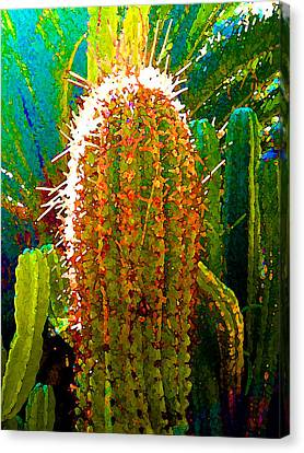 Backlit Cactus Canvas Print by Amy Vangsgard