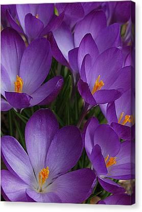 Spring Messengers Canvas Print
