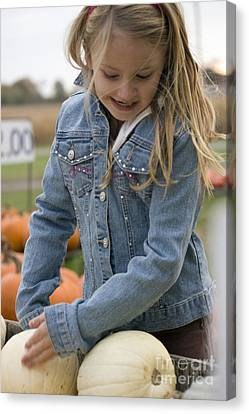 Cute Little Girl Picking A Pumpkin Canvas Print by Christopher Purcell