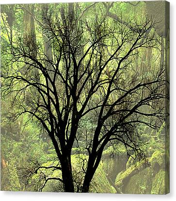 Freaky Tree 2 Canvas Print by Marty Koch