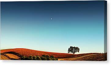 Vineyard Sky Panorama Canvas Print by Larry Gerbrandt