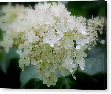 Hydrangea Canvas Print by France Laliberte