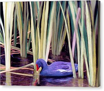 Canvas Print featuring the pastel Moorhen by Jan Amiss