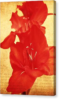 Gladiola Canvas Print by Cathie Tyler