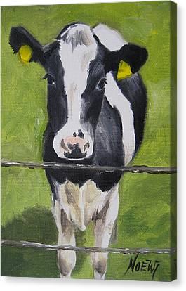 A Heifer Canvas Print by Jindra Noewi