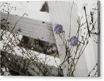 Against The Fence Canvas Print by Rebecca Cozart