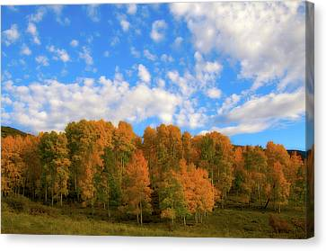 Canvas Print featuring the photograph Aspens by Steve Stuller