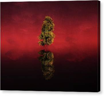 Birch In A Red Landscape Canvas Print by Jan Keteleer