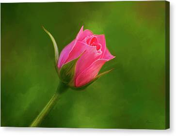 Blooming Pink Rose Canvas Print by Michael Greenaway