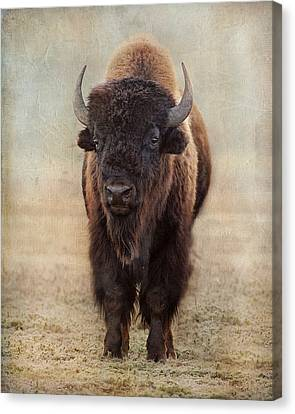 Buffalo Bull Canvas Print